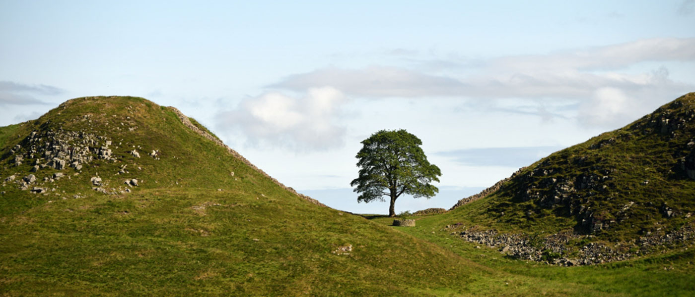 Steel Rigg And Sycamore Gap on Hadrians