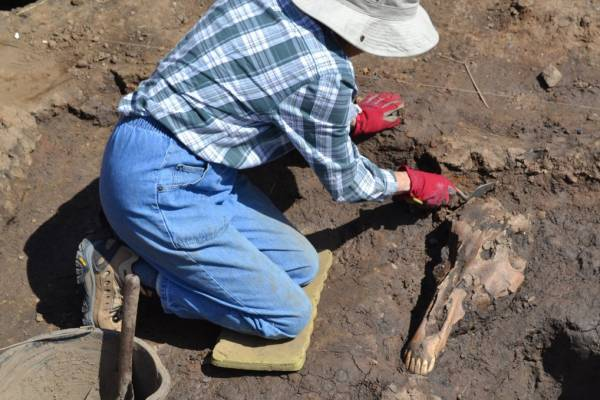 A person sitting on the ground next to a horse skull.